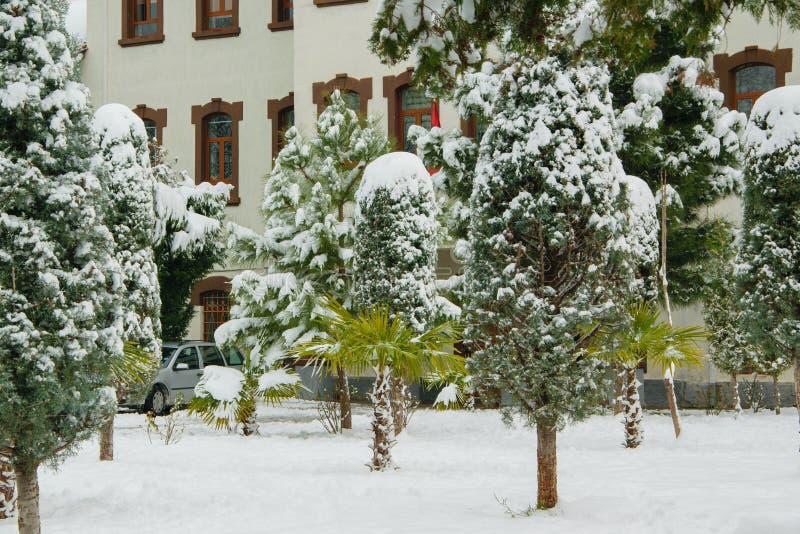 Сцена праздника Snowy, часть экстерьера гостиницы и деревья в дворе перед входом покрытом с снегом стоковые фотографии rf