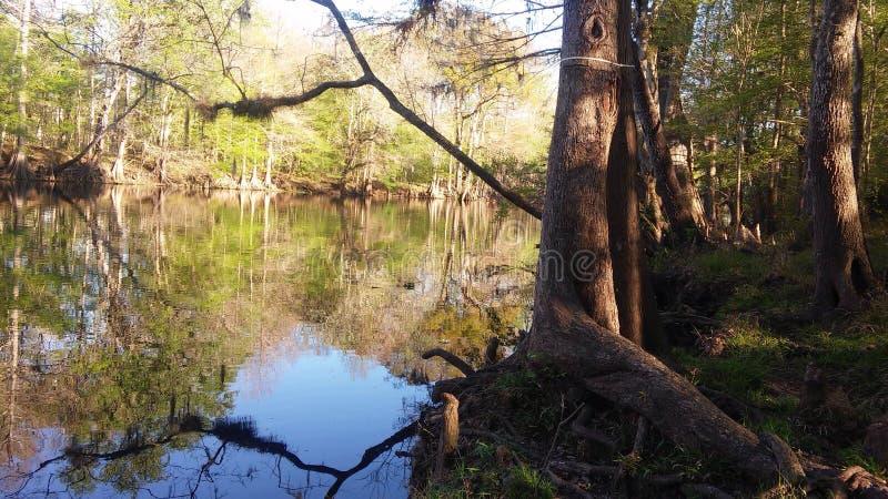 Сцена 5 реки стоковое фото rf