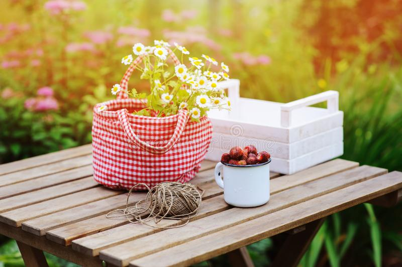 Сцена сада в июне или в июле с свежими выбранными органическими одичалой цветками клубники и стоцвета на деревянном столе внешнем стоковые изображения