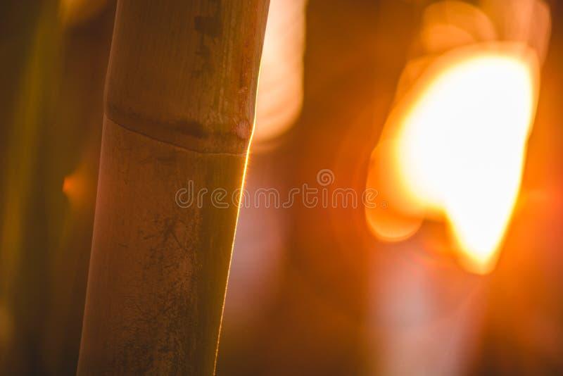 Сцена слепимости бамбука и солнца стоковая фотография rf