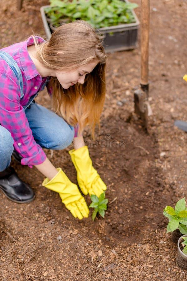 Счастливая белокурая девушка засаживая цветки в саде стоковое фото