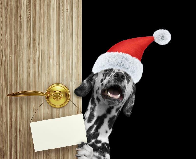 Счастливая далматинская собака в красной шляпе Санта Клауса рождества смотря вне вход двери дома с пустой карточкой Изолированный стоковые изображения