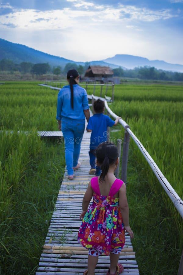 Счастливая мать и ее детская игра outdoors имея потеху в зеленом поле риса стоковая фотография rf