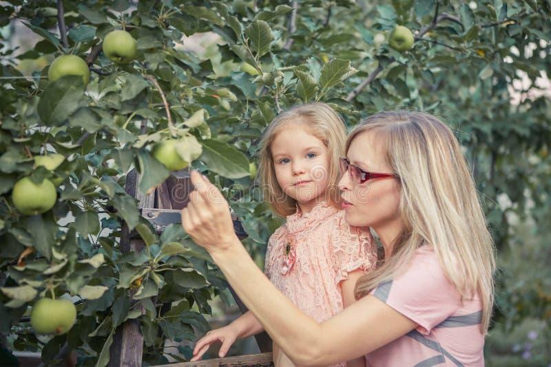 Счастливая мать и маленькие яблоки рудоразборки дочери в саде стоковая фотография
