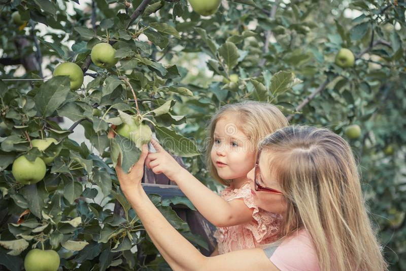 Счастливая мать и маленькие яблоки рудоразборки дочери в саде стоковое фото rf