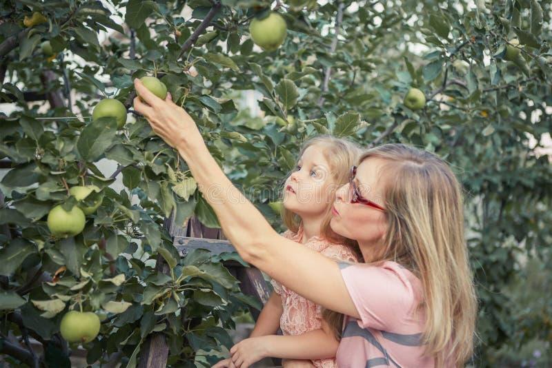 Счастливая мать и маленькие яблоки рудоразборки дочери в саде стоковые изображения rf