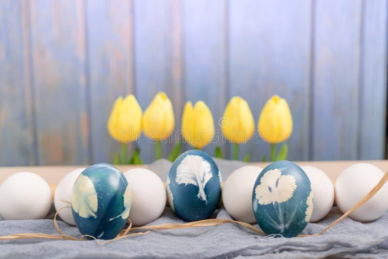 Счастливая пасха, органическое голубое пасхальное яйцо в середине белых яичек цвета ждет красить, украшения праздника пасхи стоковое фото