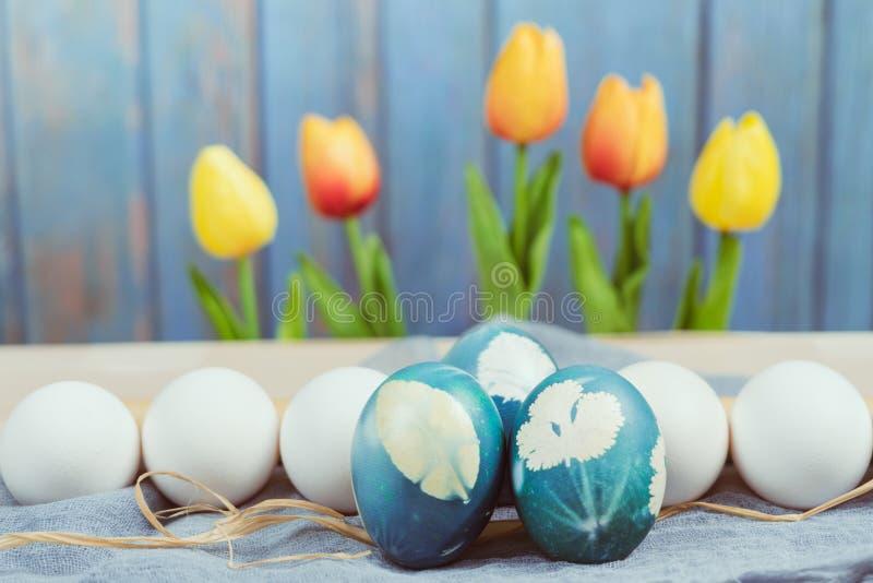 Счастливая пасха, органическое голубое пасхальное яйцо в середине белых яичек цвета ждет красить, украшения праздника пасхи стоковое фото rf