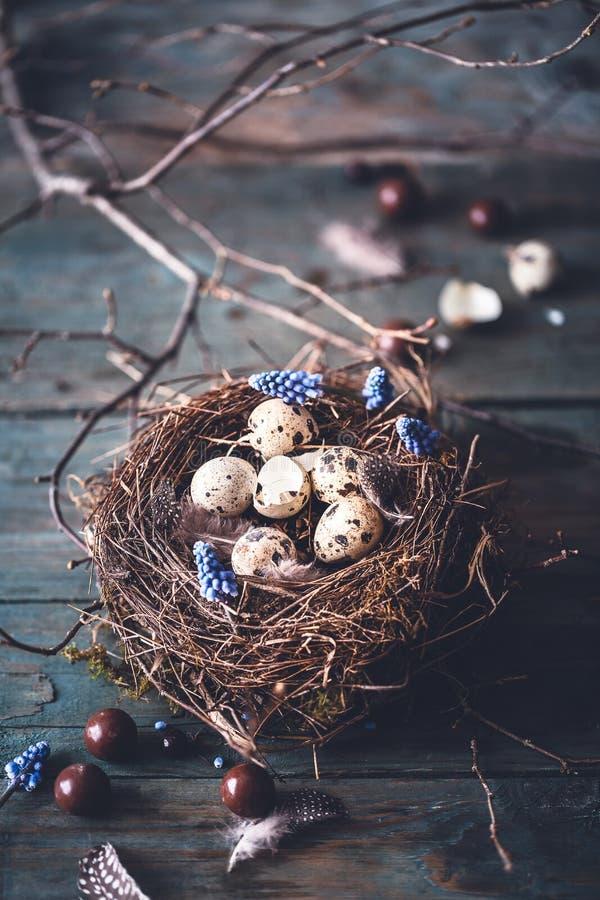 Счастливая предпосылка пасхи с шоколадом, гнездом птицы на ветви дерева стоковое изображение