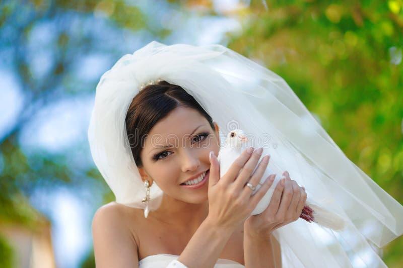 Счастливая привлекательная невеста с белым голубем стоковое изображение rf