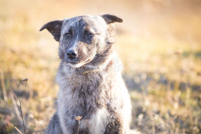 Счастливая принятая бездомная собака, принимает не ходит по магазинам стоковая фотография rf