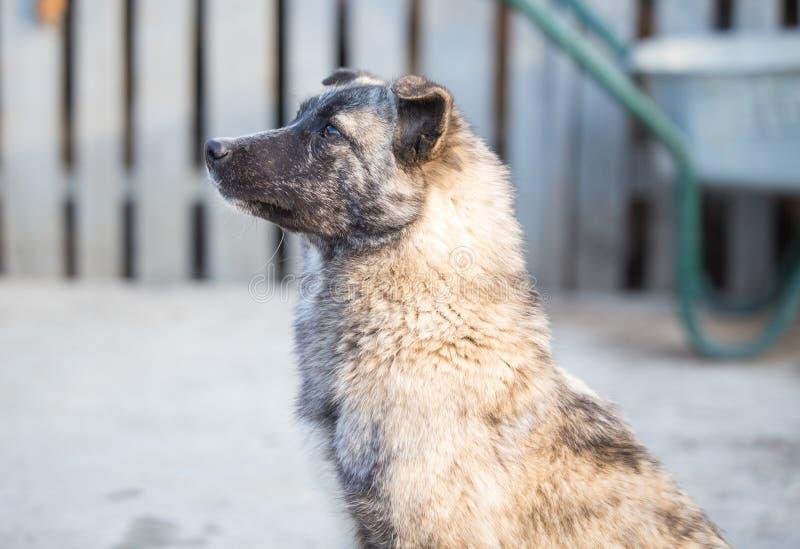 Счастливая принятая бездомная собака, принимает не ходит по магазинам стоковая фотография