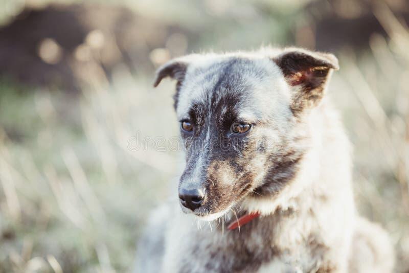 Счастливая принятая бездомная собака, принимает не ходит по магазинам стоковые фотографии rf