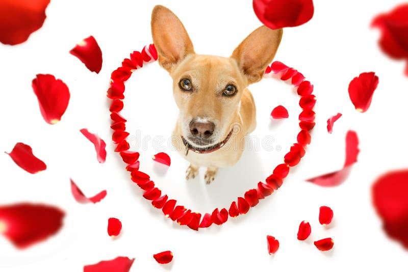 Счастливая собака валентинок стоковые фотографии rf