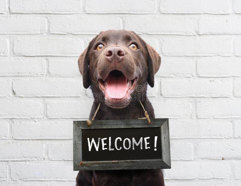 Счастливая собака с доской с радушным текстом говорит здравствуйте we're гостеприимсва открытое против стены белого кирпича на  стоковая фотография rf