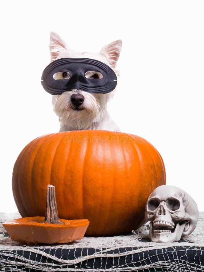 Счастливая собака Halloween стоковое изображение