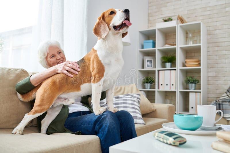 Счастливая старшая женщина с собакой бигля стоковые фото