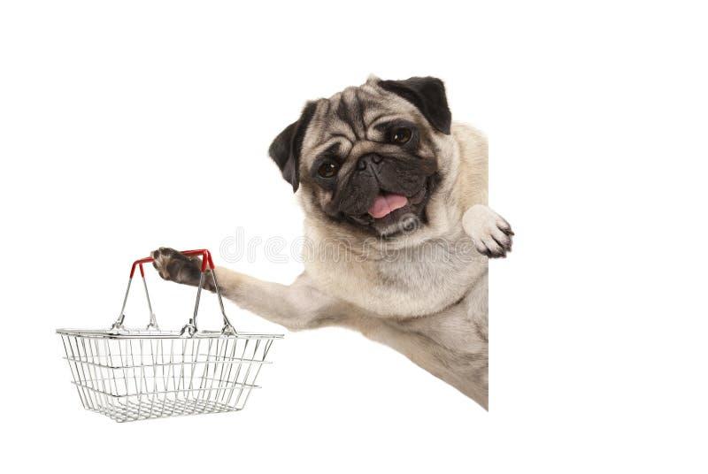 Счастливая усмехаясь собака щенка мопса, задерживая корзину для товаров металла провода, за белым знаменем стоковое фото