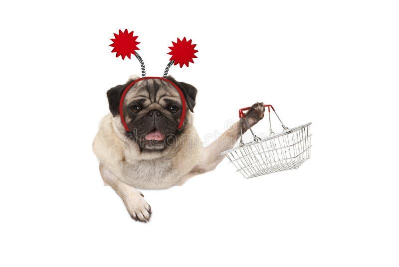 Счастливая усмехаясь собака щенка мопса задерживая корзину для товаров металла провода, нося красный diadem стоковые фото