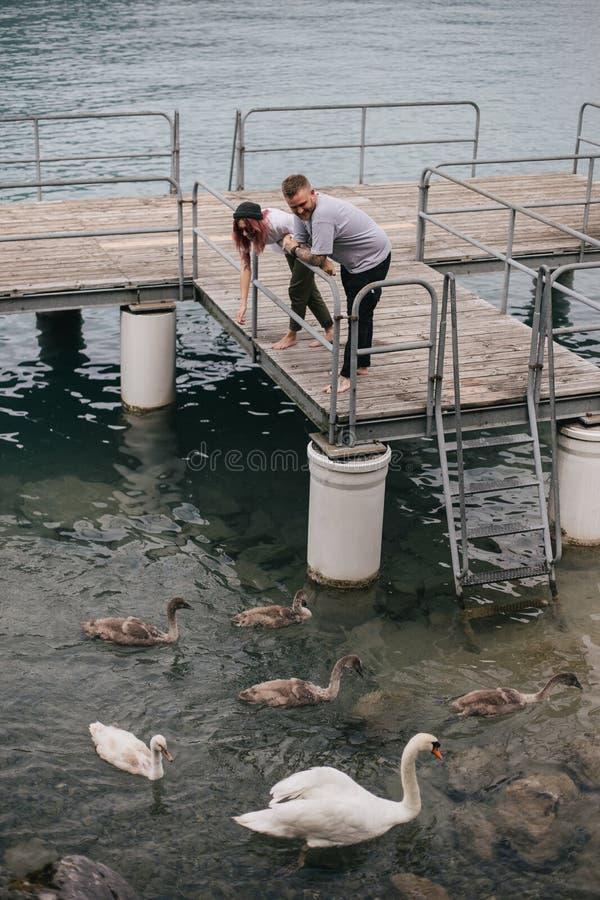 счастливое молодое положение пар на деревянном мосте и питаясь лебедях в Bern стоковое изображение rf