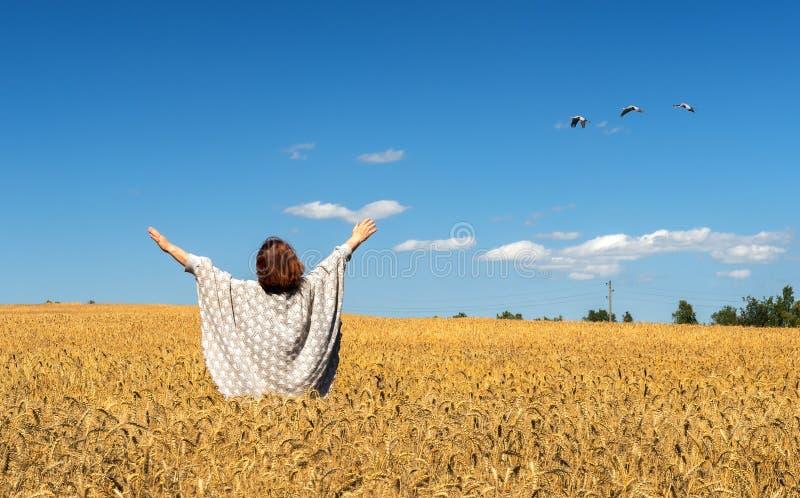 Счастливое farrmer среди богатого жать поля пшеницы стоковые изображения rf