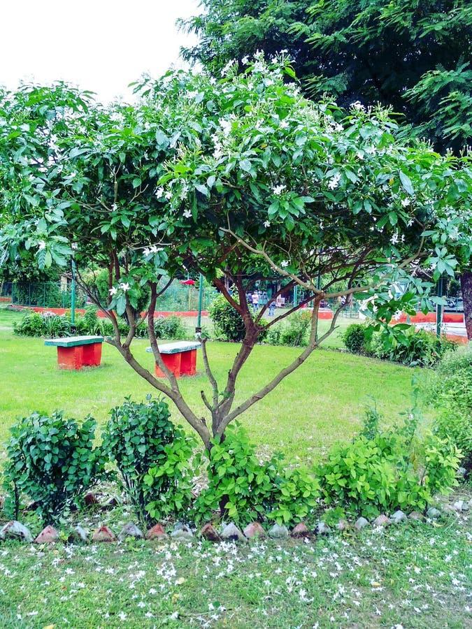 Счастливые деревья весной стоковое изображение