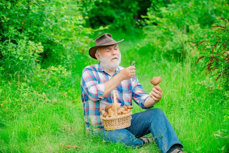 Счастливый дед - лето и хобби Идти старика Пенсионер Grandpa Старший пеший туризм в деде леса с стоковые фотографии rf
