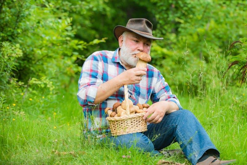 Счастливый дед - лето и хобби Пенсионер Grandpa Дед с корзиной грибов и удивленного ухода за лицом стоковое изображение