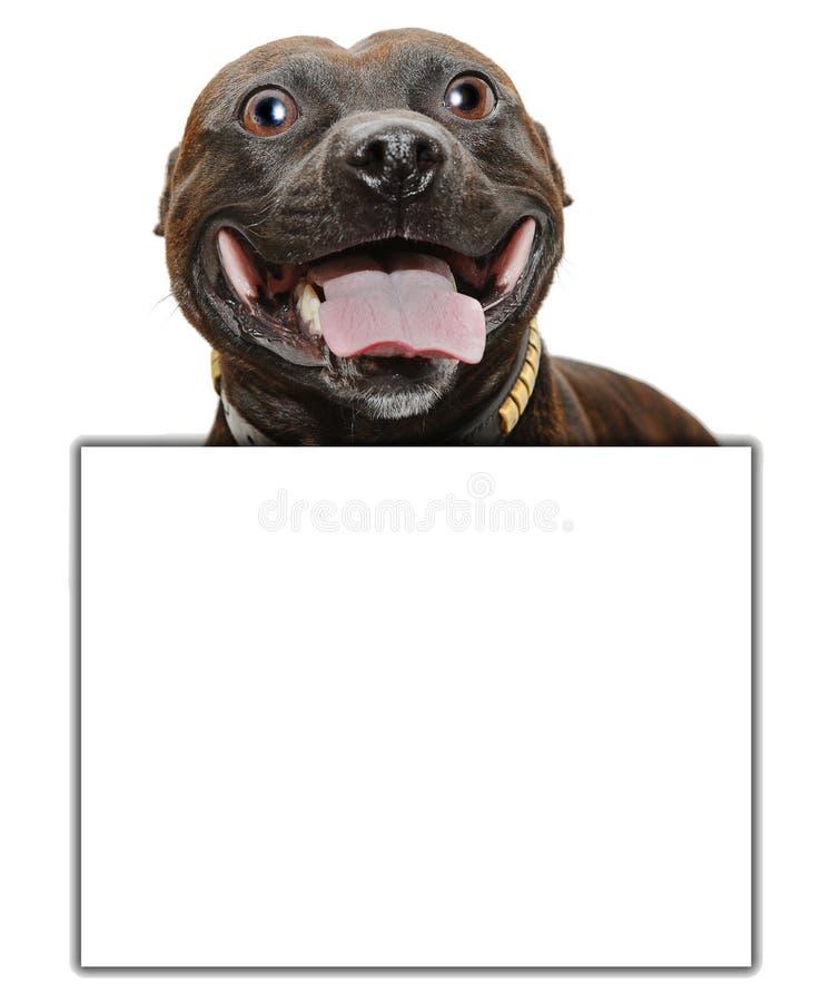 Счастливый знак собаки стоковые фотографии rf