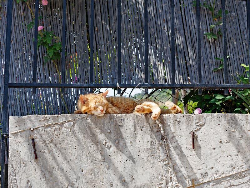 Счастливый кот имбиря спать на стене сада стоковые фото