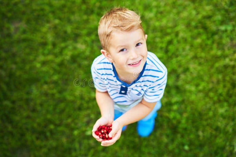 Счастливый 3 - летний мальчик имея потеху держа маленькие клубники стоковые изображения