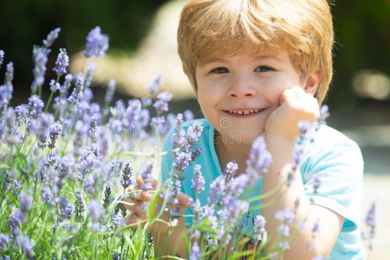 Счастливый ребенок в кустах лаванды r Свежая лаванда Ребенок в природе Трава остатков Красивое свежее лето стоковая фотография