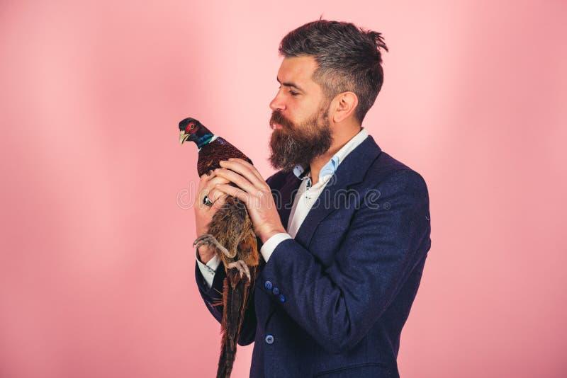 Счастливый фазан владением человека творческая идея Птичий грипп Смешная реклама Бородатый бизнесмен Битник Сумасшедший человек н стоковые изображения rf