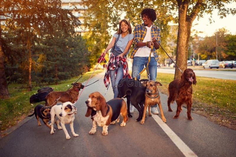 Счастливый ходок собаки женщины и человека с собаками наслаждаясь в прогулке стоковые фото