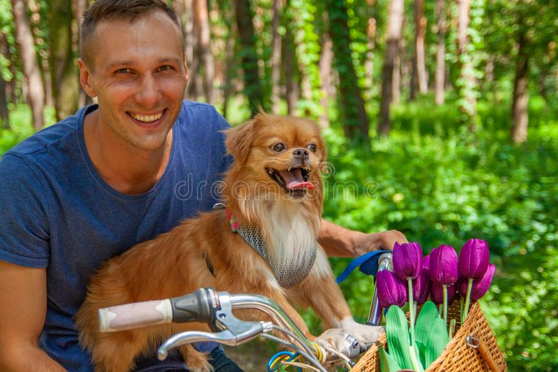 Счастливый человек на велосипеде с его собакой в корзине и тюльпанами в парке стоковое фото rf