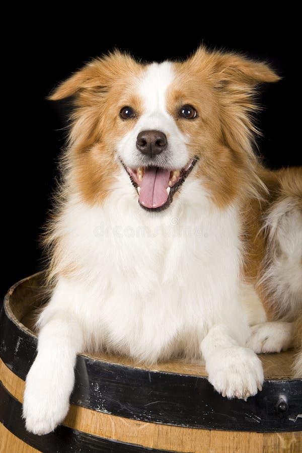 Download счастливый щенок стоковое изображение. изображение насчитывающей relaxed - 18380079