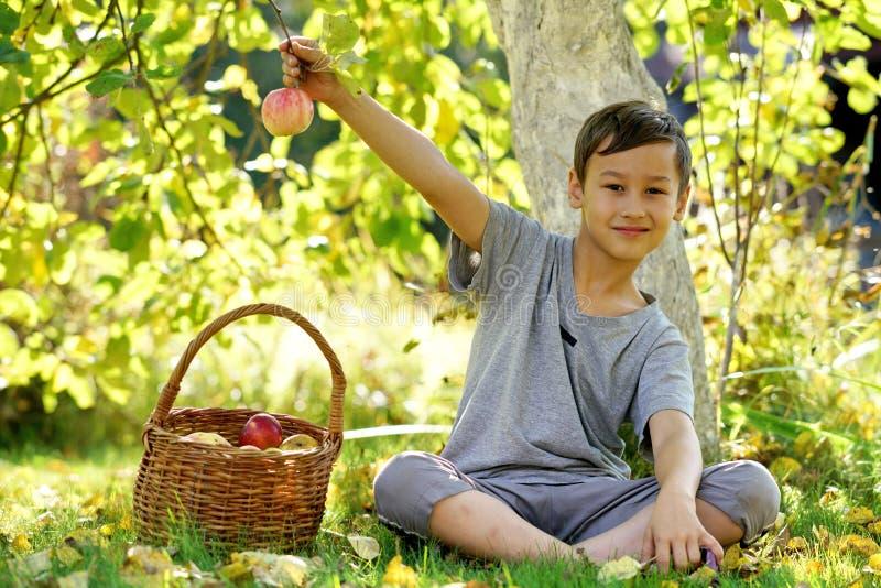 Счастливый outdoors мальчика в саде осени с яблоками стоковое изображение