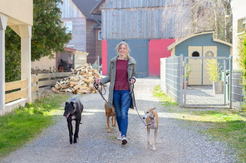 Счастливая молодая женщина идя ее 3 собаки стоковая фотография