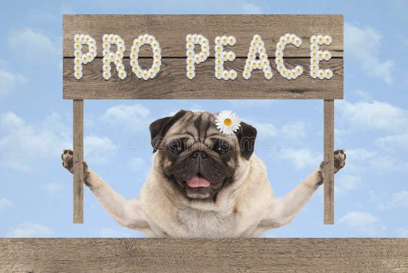 Счастливая усмехаясь собака щенка мопса с деревянным миром знака и текста pro в белых цветках стоковое изображение rf