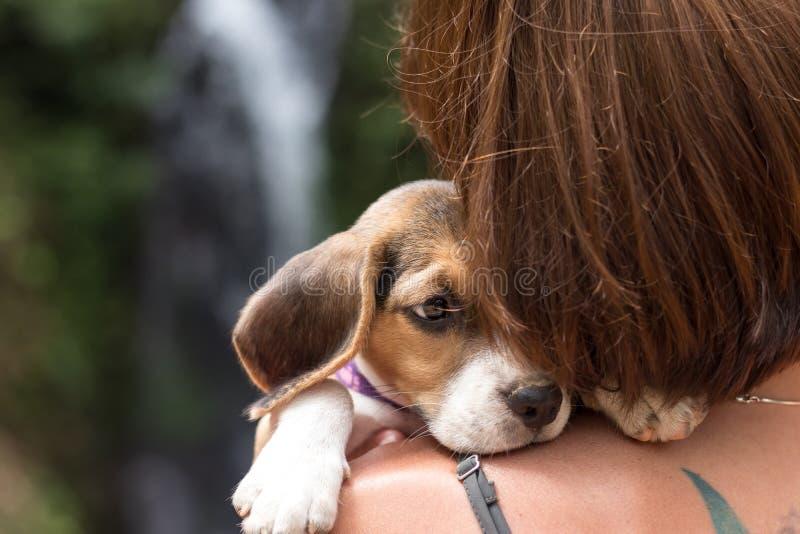 Счастливое милой женщины красивое молодое с малым биглем щенка собаки Тропический остров Бали, Индонезия Дама с биглем стоковые фотографии rf