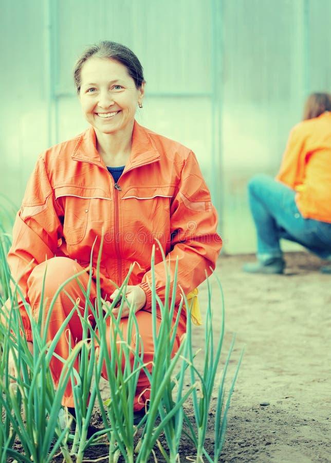 Счастливые женщины работают на оранжерее стоковые изображения rf