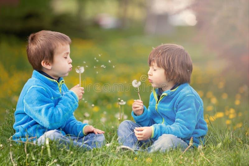 Счастливые милые кавказские мальчики, дуя одуванчик outdoors весной стоковые фотографии rf