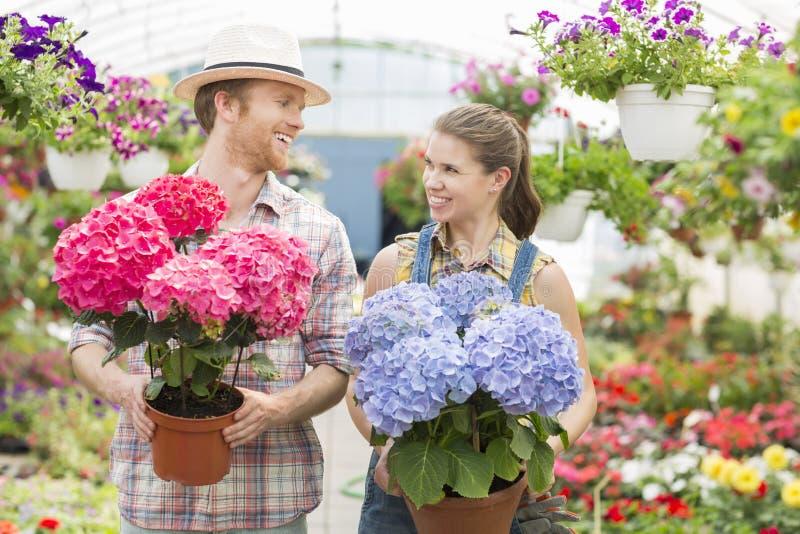 Счастливые садовники смотря один другого пока держащ цветочные горшки на парнике стоковые фото