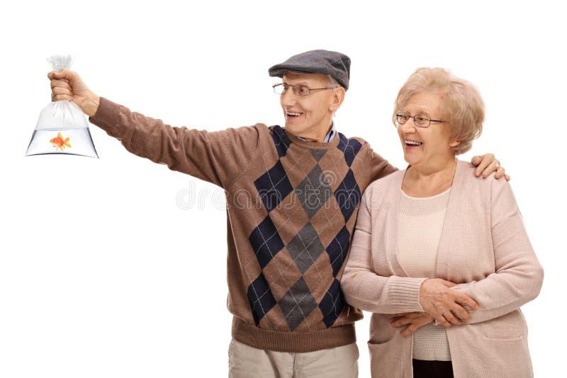 Счастливые старшии смотря рыбку в полиэтиленовом пакете стоковые фотографии rf