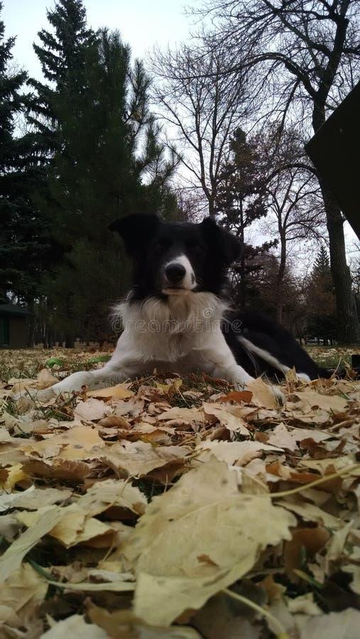 Счастливый в листьях стоковое изображение rf