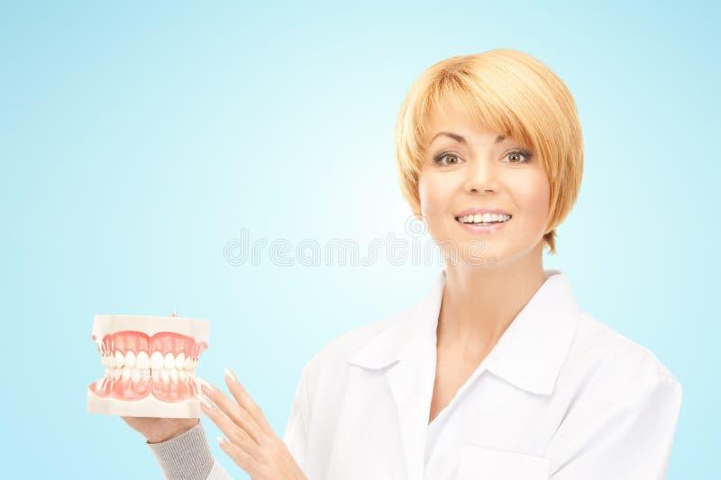 Счастливый женский доктор с моделью челюстей стоковое изображение