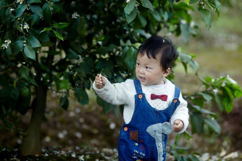 Счастливый ребёнок в деревьях лимона стоковое изображение rf
