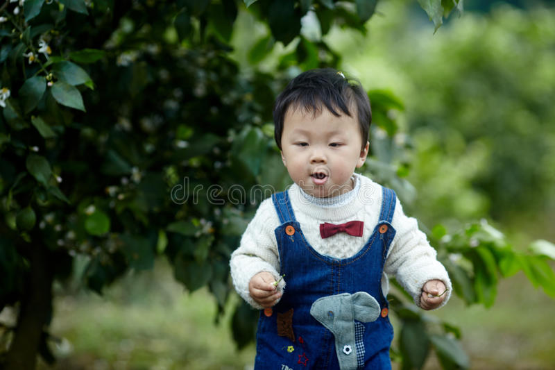 Счастливый ребёнок в деревьях лимона стоковая фотография