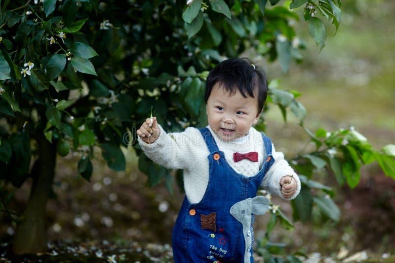 Счастливый ребёнок в деревьях лимона стоковое фото rf
