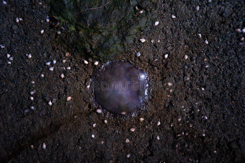 Счеснный тем медузам на береге на Kuanniang, Таиланде стоковое фото